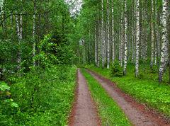 Finlandia: La constante búsqueda de una economía sustentable