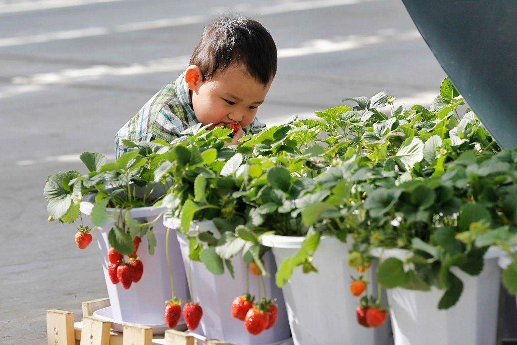 Empresa estatal china podría convertirse en potencia mundial en la producción de semillas