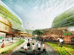 Cultivos verticales en Singapur como alternativa sustentable a la importación de alimentos