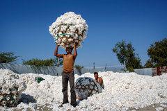 La iniciativa del mejor algodón y el futuro de la agricultura sustentable en India