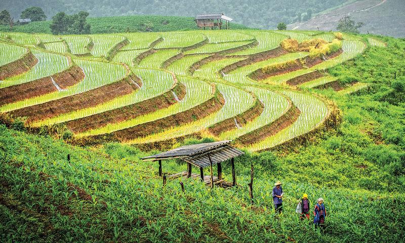 Innovación en energías verdes para la agricultura sustentable en Tailandia