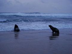 La política de océanos en Nueva Zelandia que protege a la diversidad marina del cambio climático