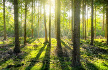 Manejo forestal sostenible: recomendaciones para América Latina