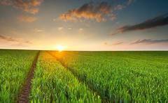 Agricultura sostenible: desafíos éticos y jurídicos del manejo de semillas