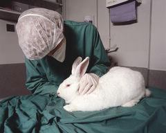 Nueva Zelandia y las consideraciones éticas para prohibir el testeo de cosméticos en animales