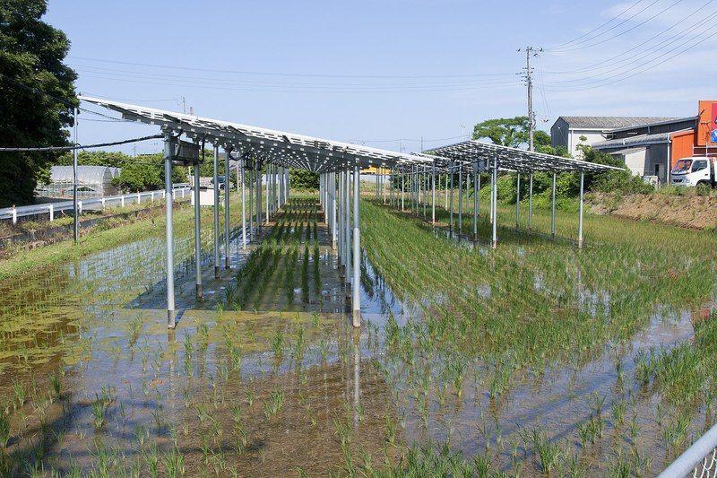 El compromiso de Japón por llevar adelante los Objetivos de Desarrollo Sostenible