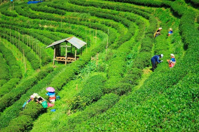 Becas para capacitarse en economía de suficiencia en Tailandia