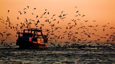 Pesca ilegal, no declarada y no reglamentada en América Latina:  Un problema para abordar en conjunto