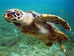Nuevas zonas marinas protegidas en América Latina