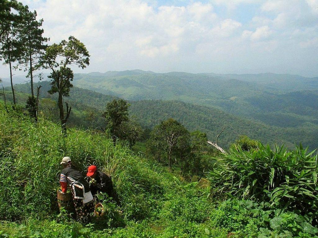 Tailandia y su enfoque para la producción agrícola sostenible