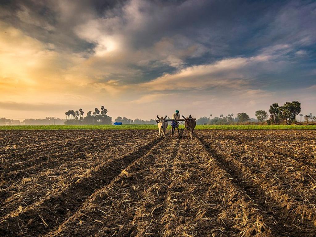 Imagen de la nota Medidas de adaptación al cambio climático y la promoción de la agricultura sostenible en India