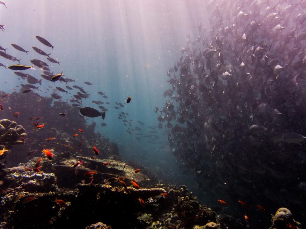 Imagen de la nota Científicos de Australia y Corea explican impacto de la desalinización en los ecosistemas marinos