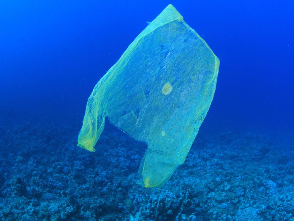 """Catalina Velasco y la contaminación de los océanos: """"Necesitamos cambiar nuestra relación con el plástico"""""""